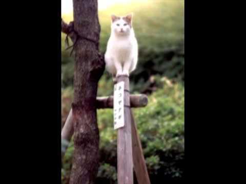 動画で面白画像!川西 宏明 ねこふんじゃったファンタジー(2台ピアノ版)面白猫画像バージョンの面白画像
