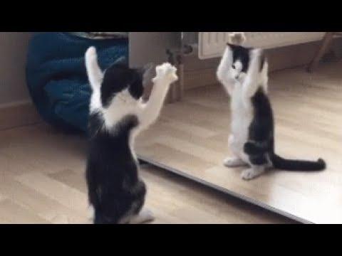 動画で面白画像!絶対笑う おもしろかわいい猫GIF画像集!【腹筋崩壊】の面白画像