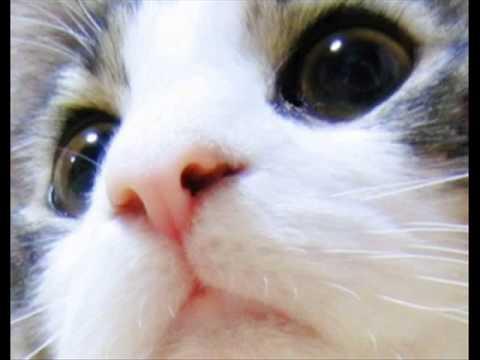 動画で面白画像!面白猫画像の面白画像