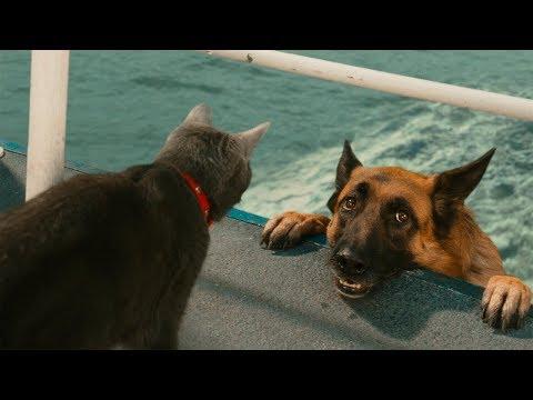 動画で面白画像!「絶対笑う」最高におもしろ犬,猫,動物のハプニング, 失敗画像集 2017 #36の面白画像