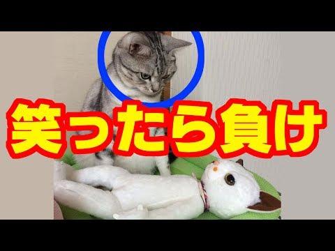 動画で面白画像!【笑ったら負け】猛烈!オモシロ画像集 6の面白画像