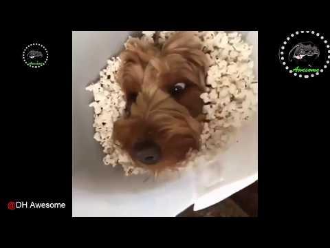 動画で面白画像!「絶対笑う」最高におもしろ犬,猫,動物のハプニング, 失敗画像集 2017 #31の面白画像