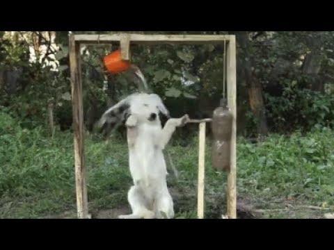 動画で面白画像!Twitterで話題 心が乱れた時に見るおもしろ動画まとめ!スカッと笑い癒されるGIF画像の面白画像