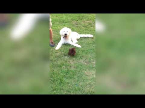 動画で面白画像!「絶対笑う」最高におもしろ犬,猫,動物のハプニング, 失敗画像集 2017 #33の面白画像