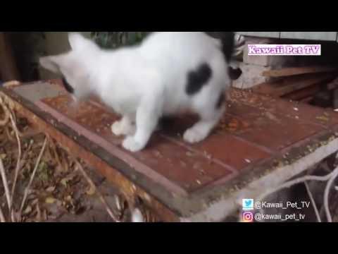 動画で面白画像!「絶対笑う」最高におもしろ犬,猫,動物のハプニング, 失敗画像集 #5の面白画像