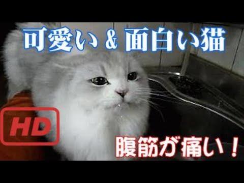 動画で面白画像!【おもしろネコ】可愛い&面白い猫GIF画像ベスト20第1弾!の面白画像