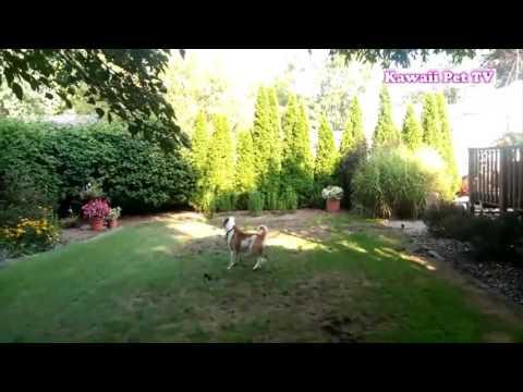 動画で面白画像!「絶対笑う」最高におもしろ犬,猫,動物のハプニング, 失敗画像集 #6の面白画像