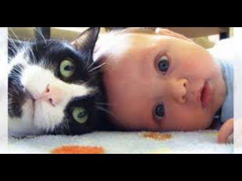 動画で面白画像!【吹いたら負け】ジワジワ来るww ネコのおもしろ画像集  「絶対笑う」最高におもしろ可愛い猫のまとめ 疲れた時にどうぞ!【癒されて笑える!】の面白画像