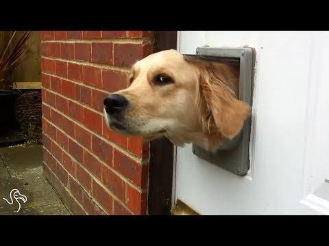 動画で面白画像!「絶対笑う」最高におもしろ犬,猫,動物のハプニング, 失敗画像集 2017 #24の面白画像