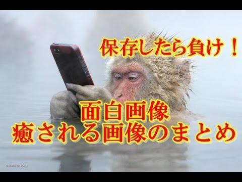 動画で面白画像!【保存したら負け!】面白画像・癒される画像のまとめの面白画像