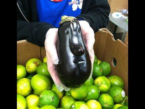 動画で面白画像!【おもしろ画像】変形野菜の楽しい表情の面白画像