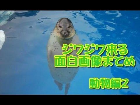 動画で面白画像!【ツイッターで話題】ジワジワ来る面白画像まとめ【動物編編】パート2の面白画像