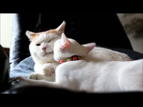 動画で面白画像!「絶対笑う」最高におもしろ犬,猫,動物のハプニング, 失敗画像集 2017  p23の面白画像