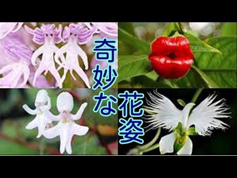 動画で面白画像!【面白画像】奇妙な花姿、そんな不思議な形に生まれた!の面白画像