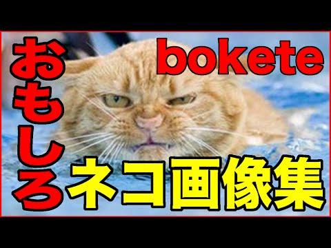 動画で面白画像!【おもしろ動物】ねこ・ネコ・猫編【爆笑画像集1】の面白画像