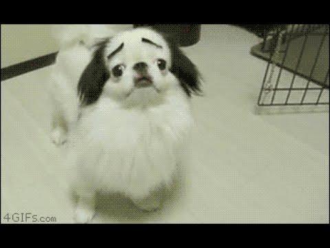 動画で面白画像!「絶対笑う」最高におもしろ犬,猫,動物のハプニング, 失敗画像集 2017 ( p22)の面白画像